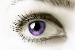 眼睛紫色 免版税库存图片