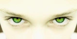 眼睛绿色严格 免版税库存图片