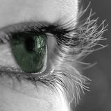 眼睛绿色自然 免版税库存照片
