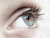 眼睛绿色 免版税图库摄影