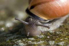 眼睛蜗牛茎 免版税库存照片