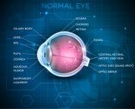 眼睛解剖学 免版税库存照片