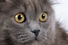 眼睛黄色 库存图片