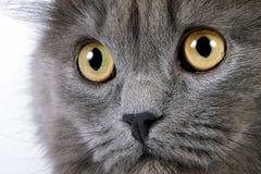 眼睛黄色 免版税库存照片