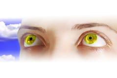 眼睛黄色 图库摄影