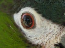 眼睛,特写镜头金刚鹦鹉,羽毛 免版税库存图片