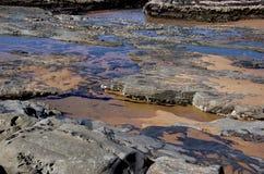 眼镜和帽贝被复的岩石处于低潮中 图库摄影