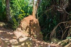 眼镜王蛇巢,斯里兰卡,向密林海滩的路 免版税库存图片