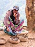 眼镜蛇在斯里兰卡的高地的埃拉 免版税库存图片