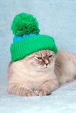 戴着一个被编织的帽子的猫 免版税库存照片