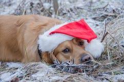 戴着圣诞节帽子的狗 免版税图库摄影