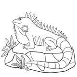 着色页 逗人喜爱的鬣鳞蜥坐岩石 库存照片