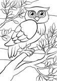 着色页 鸟舍 逗人喜爱的猫头鹰 免版税图库摄影