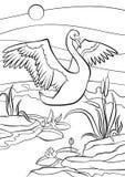 着色页 鸟舍 逗人喜爱的美丽的天鹅 图库摄影