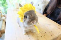 着迷的兔子 免版税库存图片
