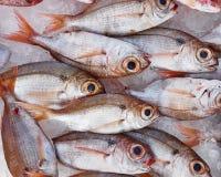 睁大眼睛的海鲷鱼待售 免版税库存照片
