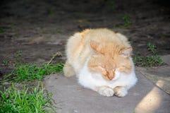 睡眠和逗人喜爱的猫在庭院里 库存图片