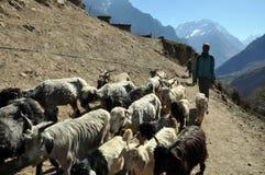 睡眠在喜马拉雅山 库存图片