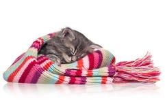 睡着的小猫 免版税图库摄影