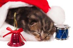 睡着的小猫 免版税库存照片