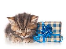 睡着的逗人喜爱的小猫 免版税库存照片