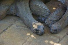 睡着草龟的夫妇 免版税库存照片
