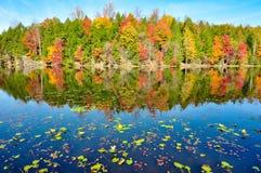 睡莲叶和秋天颜色的镜象反射在海湾Mountain湖的在Kingsport,在秋天期间的田纳西 免版税库存照片