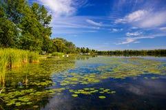 睡莲叶坐一条风景河的镇静表面 免版税库存照片