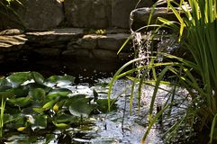 睡莲叶,水,绿色,夏天,青蛙,自然 库存图片