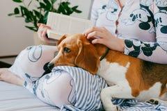 睡衣的女孩在家读一本书与小猎犬小狗 小猎犬是在女孩` s膝盖的谎言 图库摄影
