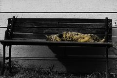 睡觉一只懒惰的猫在阳光下 库存图片