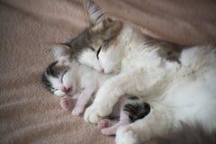 睡觉与小猫的猫和拥抱他 库存图片