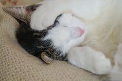 睡觉与爪子的猫盖它的在白色毯子的面孔 库存图片