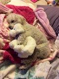 睡觉与被充塞的狗的狗 免版税库存图片