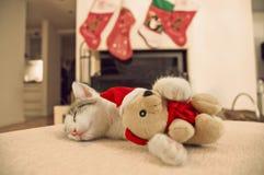 睡觉与他的圣诞节玩具的小猫 库存照片