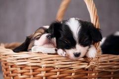 睡觉两只的小狗,特写镜头 库存图片