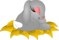 睡觉兔宝宝 库存图片