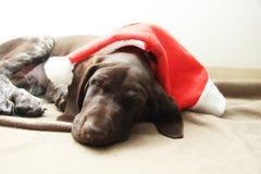 睡觉圣诞节小狗 库存图片
