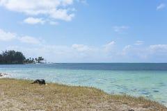 睡觉在一个热带海滩的狗 免版税库存图片