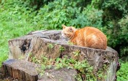 睡觉在一个老树桩的猫 免版税库存照片