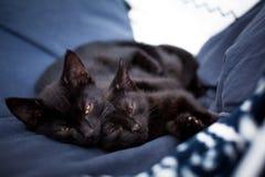 睡觉在一张蓝色床上的黑小猫 免版税库存图片