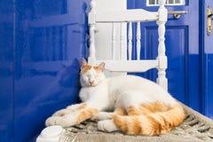 睡觉在一把传统白色木椅子的逗人喜爱的红色猫在米科诺斯岛海岛,希腊 库存照片