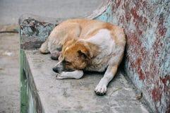 睡觉在一条长凳的街道狗在曼德勒 图库摄影