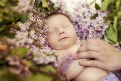 睡觉在丁香的颜色的新出生的女孩 库存照片