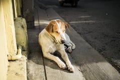 睡觉在下午的阳光下的流浪狗 免版税库存图片
