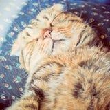 睡觉在与减速火箭的过滤器作用的床上的逗人喜爱的猫 免版税图库摄影