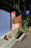 睡觉在公共汽车站狗 库存照片