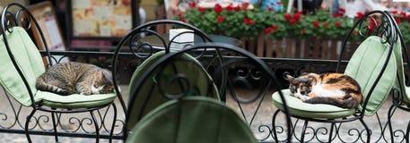 睡觉在古色古香的椅子的两只懒惰猫 库存照片