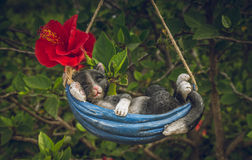 睡觉在吊床的石膏猫 免版税库存图片