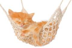 睡觉在吊床的逗人喜爱的红发小猫 免版税库存图片